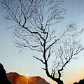 Tree Above Crummock Water by Paul Dene Marlor