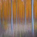 Tree Abstract by Engin Tokaj