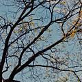 Tree Against The Sky by Kerri Farley