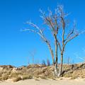 Tree And A Dune by Linda Kerkau