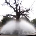 Tree And Fountain by Nishigandha Gaikwad