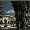 Tree And Gazebo by Thomas Fields