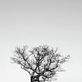 Tree And Moon by David Waldrop