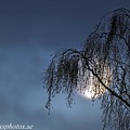 Tree And Moon by Stefan Pettersson