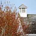 Tree And School House 795 by Jerry Sodorff