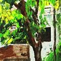 Tree And Shade by Usha Shantharam