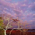Tree And Sky At Cape May Point State Park  Nj by Eric  Schiabor