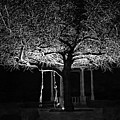 Tree And Swing by Terron Murray