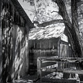 Tree And The Barn by Douglas Craig