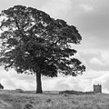 Tree And The Cage Tower In The Distance In Lyme Park Estate In B by Iordanis Pallikaras