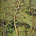 Tree Art by Martyn Arnold