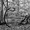 Tree Art by Robin Lynne Schwind