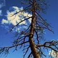 Tree At Bryce Canyon Utah. by Martina Fagan