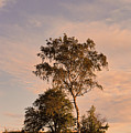 Tree At Dusk On Suomenlinna Island by Greg Matchick