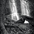 Tree At Falls In Black And White by Greg Mimbs