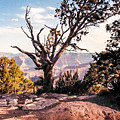 Tree At Moran Point by Mike Wheeler