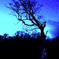 Tree At Night by Martin Williams