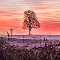 Tree At Sunrise Eaton Rapids by Joe Holley