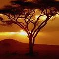 Tree At Sunset. L B by Gert J Rheeders