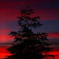 Tree At Sunset by Matthew Farmer