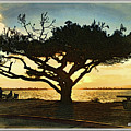 Tree At Vacation Island by Monzo Rock