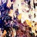 Tree Bark 2 by Ken Lerner