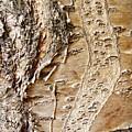 Tree Bark 9 by Sarah Loft