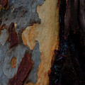 Tree Bark Collection # 52 by Philip Johnson