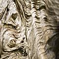Tree Bark by Dawn Kish