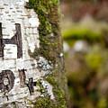 Tree Bark Graffiti - H 04 by Helen Northcott