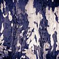 Tree Bark by John Magyar Photography