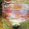 Tree Bark by Samiksa Art