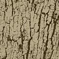 Tree Bark Texture Brown by Eddie Barron
