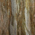 Tree Bark Textures And Hues by Andrea Kollo