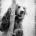 Tree Bear by Athena Mckinzie