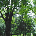 Tree Bench by Jost Houk