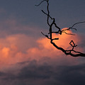 Tree Branch At Sunset by Dorothy Harris