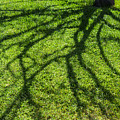 Tree Branch Shadow by Pam  Elliott