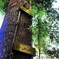 Tree by Brandi Tye