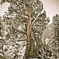 Tree by Brenton Woodruff