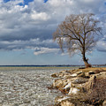 Tree By Water by Barbara Treaster