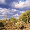 Tree Cactus by Kathleen Heese