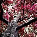 Tree Canopy Red by Saga Sabin