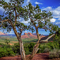 Tree Captures Sedona by Gordon McDaniel