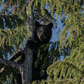 Tree Climbers by Rod Wiens