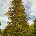 Tree Db by Leif Sohlman