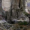 Tree by Ed Hall