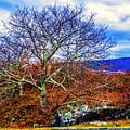 Tree Fan by Roberta Bragan