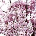 Tree Flowering In Spring by Robin Lynne Schwind
