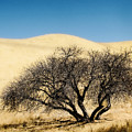 Tree Formation 3 by Karen  W Meyer
